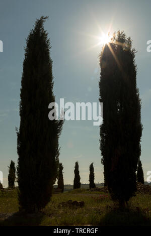 Sunflare behind classic cypress trees in a hill in Tuscany, Italy - Stock Image