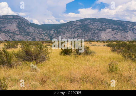 Osoyoos Desert Centre, BC, Canada, is 67 acre nature interpretive facility with a 1.5 km self-guided tour on elevated - Stock Image