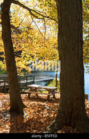 fall foliage, autumn, leaves, fall color, natural world, new york state, nobody, north america, outdoors, plants, - Stock Image