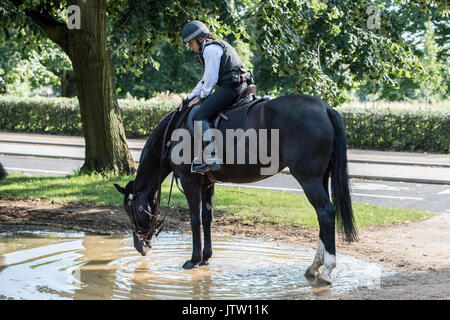 London, UK. 10th August, 2017. A police horse enjoys a drink in Hyde Park, London, UK as warm temperatures return in the British capital this afternoon. Credit: Ben Furst/Alamy Live News. - Stock Image