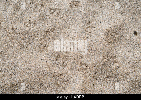 Footprints in the sand - Stock Image