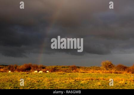 Pevensey Levels, East Sussex, UK. 2nd Jan 2019. UK weather. A rainbow appeared this afternoon as rain clouds moved over the Pevensey Levels in East Sussex, UK.  Credit: Ed Brown/Alamy Live News - Stock Image