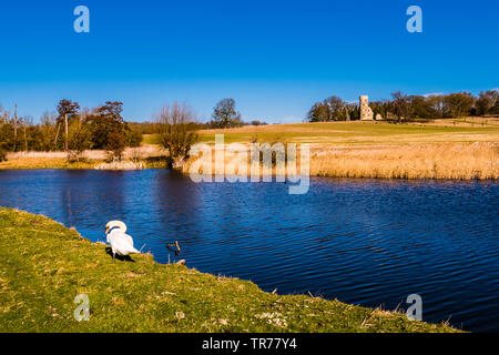 Swan and the Serpentine Lake at the Wimpole Estate, Cambridgeshire, UK - Stock Image