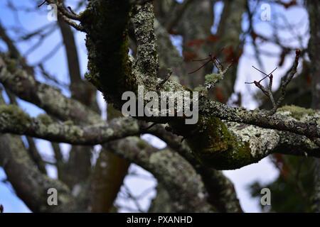 Gnarled Tree - Stock Image