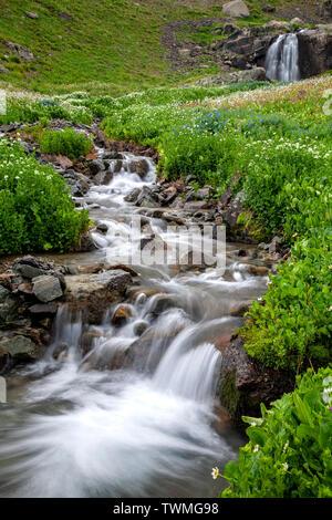 Waterfalls, creek and wildflowers, American Basin, San Juan National Forest, Colorado USA - Stock Image