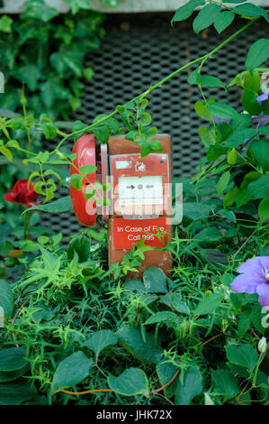 Fire Alarm nestled amongst garden plants, Flower Dome, Gardens by the Bay, Singapore - Stock Image
