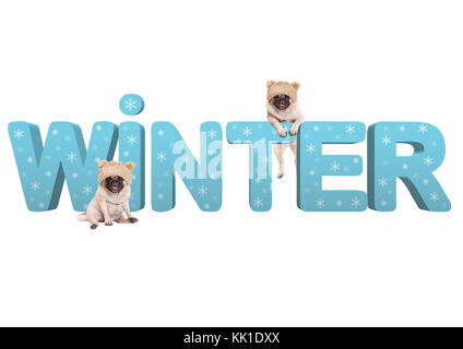 two cute pug dogs with knitted hat and 3d text Winter in light blue with snowflakes, isolated on white background - Stock Image