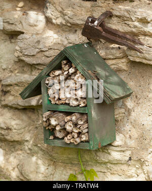 Garden bug house, dried hollow plant stems for over-wintering of insects - Stock Image