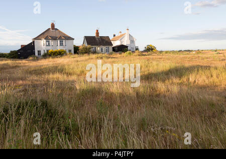 Houses next to the beach summer wildflowers  and grasses on the SSSI at Shingle Street, Hollesley, Suffolk, England, UK - Stock Image