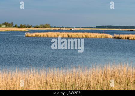Bodden landscape near Zingst,  reed along the waterfront, Zingst,  Baltic Sea, peninsula of Fischland-Darß - Stock Image