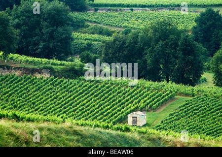 vineyard hut chateau gudeau saint emilion bordeaux france - Stock Image