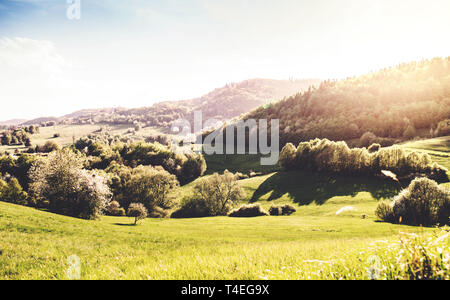 Panoramic view of landscape of meadows and woodland. Sunset in spring nature. - Stock Image