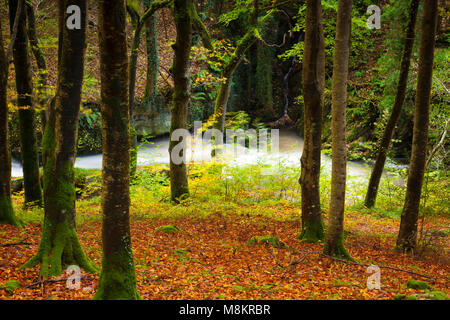 Stream flowing through woodland in the Peak District, Derbyshire, England, UK - Stock Image