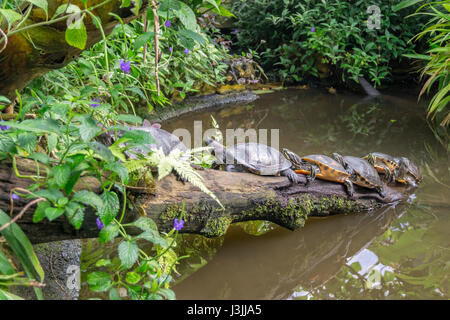 Tropical Butterfly House, Sheffield, Nature - Stock Image