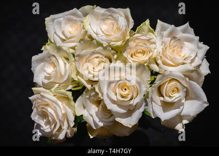White rose flowers bundled together against black background - Stock Image