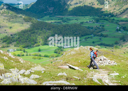 A female hiker walking down from the summit of Glaramara towards Thornythwaite Fell in the Lake District. - Stock Image