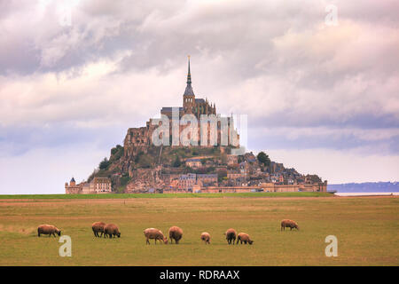 Mont Saint Michel and sheeps, Normandy, France - Stock Image