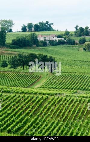 vineyard saint emilion bordeaux france - Stock Image