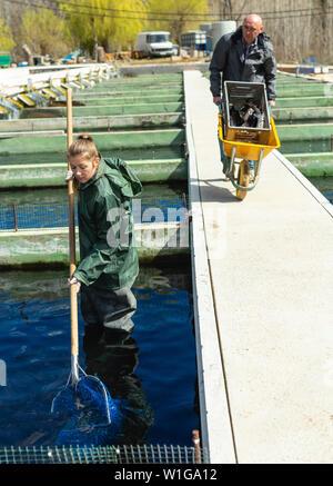 Man and woman working at sturgeon fish farm - Stock Image