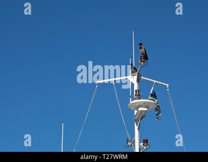 Two crows have taken up the position of lookout in the mast of a ferry on the Oslo fjord in Norway - Stock Image