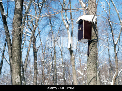 Handmade ornate wooden birdhouse attached to a large tree in a forest in winter with snow covered roof providing a home for birdlife - Stock Image