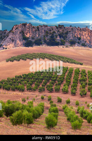 Craggy rocks and olive groves just west of Cuevas del Becerro, Malaga Province, Andalucia, Spain - Stock Image
