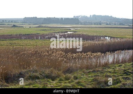 Overy Marshes, part of Holkham National Nature Reserve, near Burnham Overy Staithe in Norfolk. Winter view. - Stock Image
