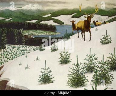 Deer in Snow Mountain - Stock Image