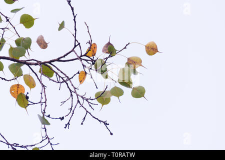 Green leaves pattern background, Natural background and Green yellow leaves pattern background, Natural background and wallpaper - Stock Image