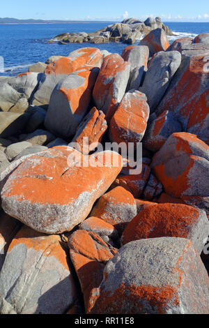 Skeleton Point, Binalong Bay, Bay of Fires, Tasmania, Australia - Stock Image