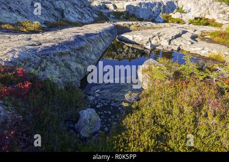 Autumn Colors Detail and Blue Mountain Lake Landscape Scenery on Mount Seymour, North Shore Mountains above Vancouver, British Columbia, Canada - Stock Image