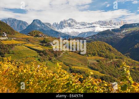 Vineyards near Bolzano, Trentino-Alto Adige/Suedtirol, Italy - Stock Image