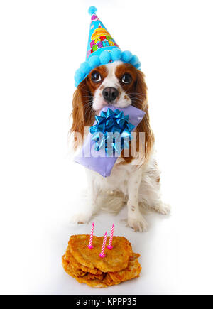 Happy birthday dog photo. Cavalier king charles spaniel puppy dog celebrate 3. birthday. Three years old puppy with - Stock Image