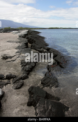 Punta Espinoza, Fernandina (Narborough) Island, Galapagos Islands, Ecuador, South America - Stock Image