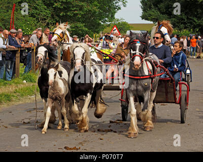 piebald horses running alongside galloping horse drawn trap on the hill Appleby-in Westmorland at the crowded annual Appleby Horsefair, Cumbria, England  UK, 8 June, 2018. OLYMPUS DIGITAL CAMERA Credit: Steve Holroyd/Alamy Live News - Stock Image