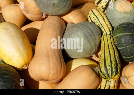 Close-up of various types of organic squash for sale at a market in Vancouver, BC, Canada - Stock Image