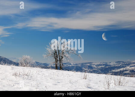 isolated tree in the icy meadow under moon light - Stock Image