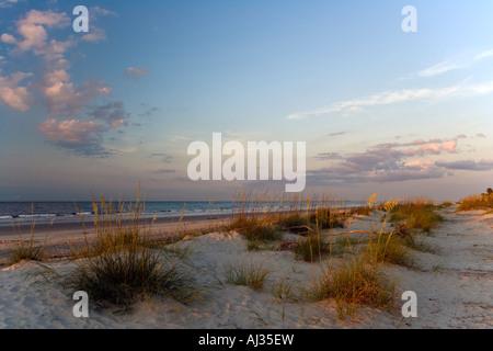 Sea Oats and driftwood on the beach at sunrise on Hilton Head Island South Carolina - Stock Image