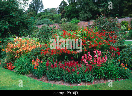Red flower border with crocosmia, penstemon and antirrhinum in a country garden - Stock Image