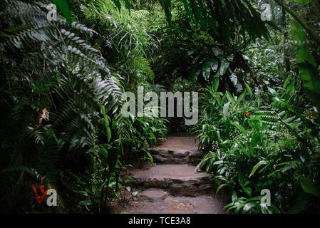 Footpath and steps in the Sacred Monkey Forest Sanctuary, Ubud, Bali, Indonesia - Stock Image