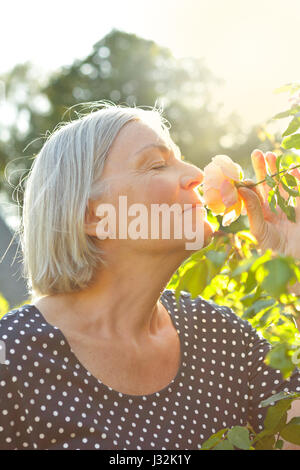 Senior woman in her garden enjoying the scent of a rose flower on a warm and sunny summer afternoon with closed - Stock Image