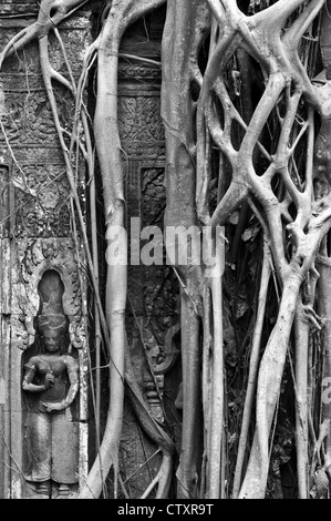 Strangler fig and silk-cotton tree roots around the 'Tomb Raider' doorway, Ta Prohm Temple, Angkor, Cambodia - Stock Image