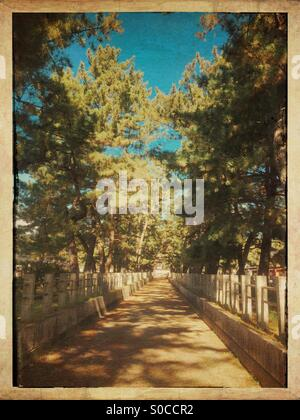 Pine trees line a dirt path with granite stone fence below blue sky. Vintage frame and paper texture overlay. - Stock Image