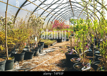 various flowers and plants in nursery greenhouse store - Stock Image