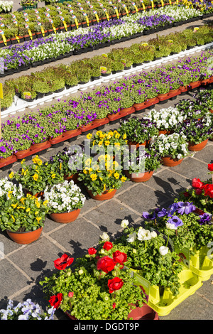 Row of Spring plants and flowers for sale - Stock Image