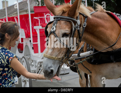 Woman, looking scared, feeding carriage horse an apple slice - Stock Image