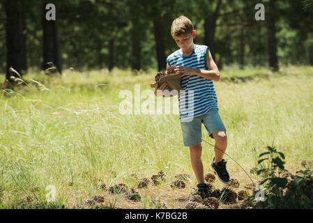 Boy collecting pine cones - Stock Image