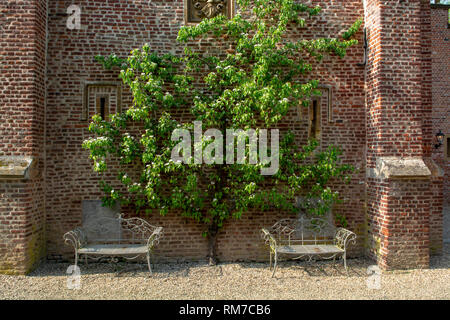Wall of old castle with 2 iron benches and klimbing big pear tree, landscape design gardens - Stock Image
