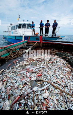 Fisheries conducting a spot check of the catch of fish, Brunei - Stock Image