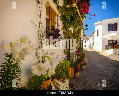 Arum lilies and a vertical garden in Macharaviaya, mountain village and home to international artists, Province of Málaga, Andalusia, Spain - Stock Image